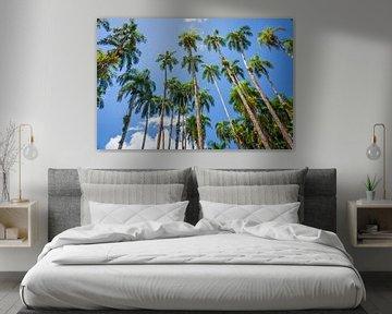Palmen im Palmengarten, Paramaribo von Marcel Bakker