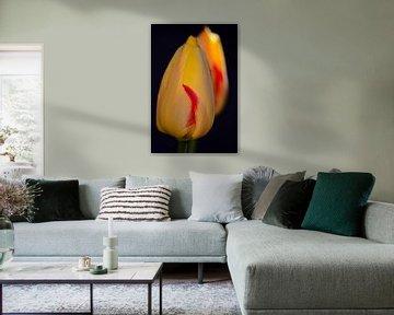 Die Blüte einer gelben Tulpe von Gerard de Zwaan