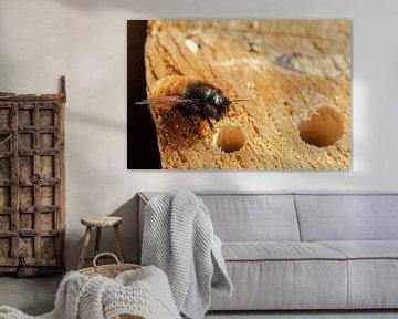 Une abeille assise sur un hôtel d'insectes sur Nynke Altenburg