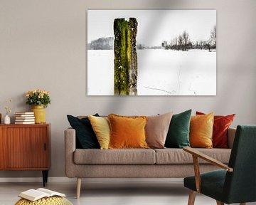 Eikenhout van Geert-Jan Timmermans