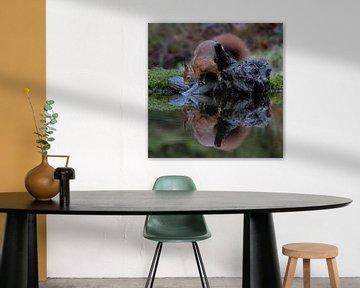 Ecureuil avec réflexion dans l'eau sur Sylfari Photography