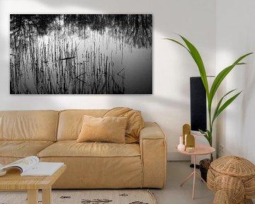 riet in het water, reflecties van de bomenrij op de achtergrond van Studio de Waay