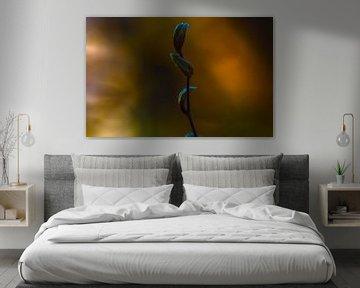 Concept nature : Des bourgeons au coucher du soleil sur Michael Nägele