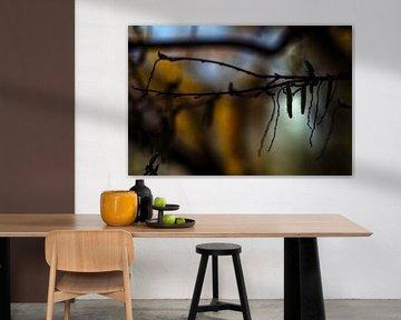 Concept nature : Les bourgeons dans la lumière sur Michael Nägele