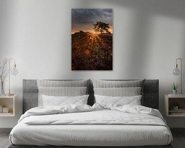Stralende zonsopkomst op de Brunssummerheide van peter reinders