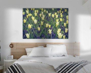 Blumengarten   Tulpen und blaue Trauben von Marianne Twijnstra-Gerrits