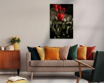 Rote Tulpe von Sanne van Pinxten