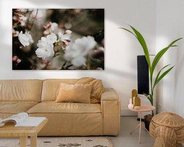 Blume von Sanne van Pinxten