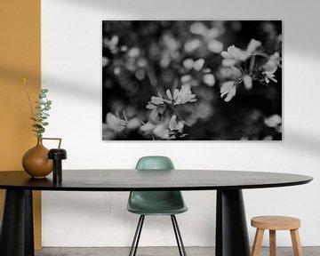 Blüte schwarz-weiß von Sanne van Pinxten