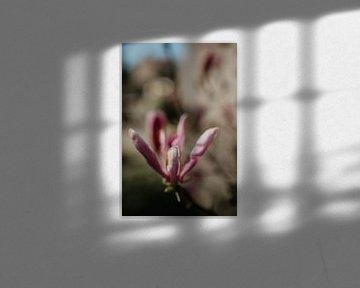 Blume mit Bokeh von Sanne van Pinxten