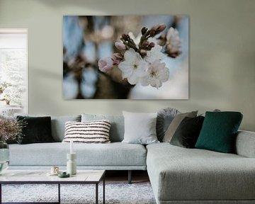 Blühen mit Bokeh von Sanne van Pinxten