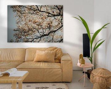 Blüte am Baum von Sanne van Pinxten