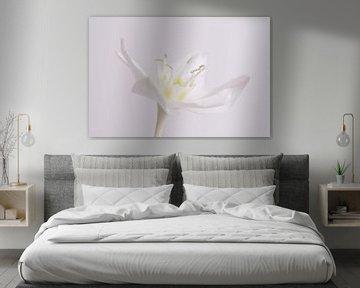 Witte lelie van Esther van der Linden