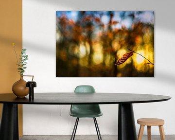 Herfstkleuren.01 (2x3) van Timo Bergenhenegouwen