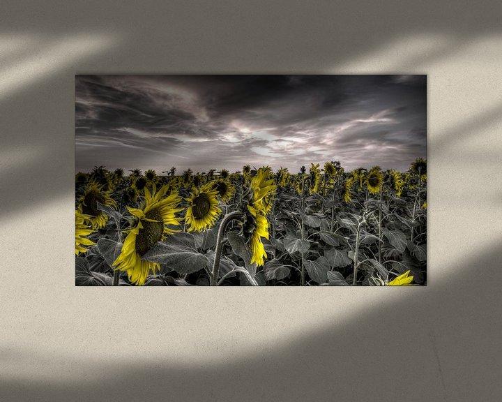 Sfeerimpressie: Zonnebloemen tegen grijze achtergrond van Atelier Liesjes