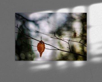 Herfstkleuren.05 (2x3) van Timo Bergenhenegouwen