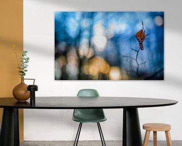 Herfstkleuren.06 (16x10) van Timo Bergenhenegouwen