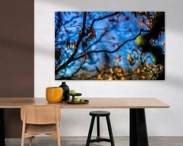 Herfstkleuren.07 (16x10) van Timo Bergenhenegouwen