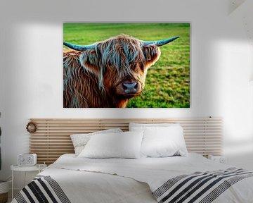 Rosa schottische Highlander-Kuh schaut Sie an