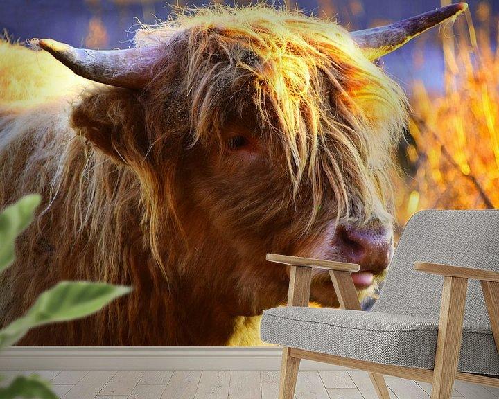 Beispiel fototapete: Schottische Highlander-Kuh in Nahaufnahme von Atelier Liesjes