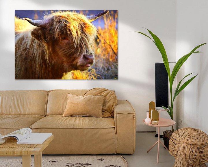 Beispiel: Schottische Highlander-Kuh in Nahaufnahme von Atelier Liesjes