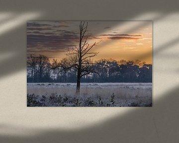 eenzame boom op de koude heide van Tania Perneel
