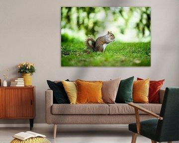 Eekhoorn in het groen van Thijs van Beusekom