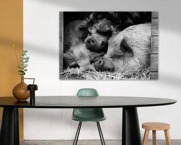 Hängende Bauchschweine umarmen von Tosca Dekker - Fleury