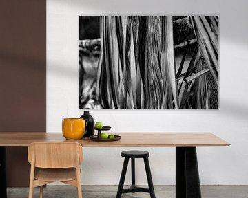 Palmboom van Fotoverliebt - Julia Schiffers