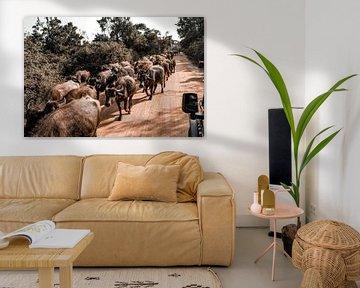 Safari van Fotoverliebt - Julia Schiffers