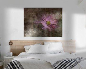 Cosmea Dream von Claudia Gründler