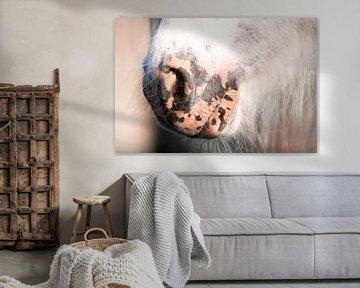 Shetlandpony von Jeroen Mikkers