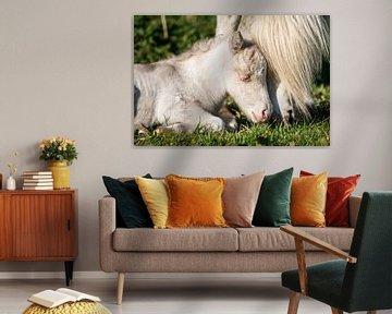 Schattig veulen van een pony (shetland) van Jeroen Mikkers