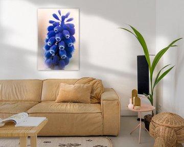Des raisins bleus au soleil sur Jan van der Knaap