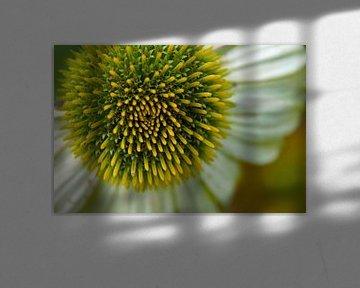 Blumen-Makro-Fotografie von wil spijker
