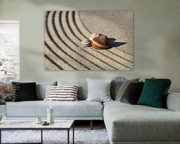 Coquilles d'escargot et lignes dans le sable sur Karina Baumgart