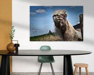 Das glückliche Pferd von Duo-Fotografie