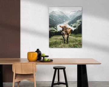 Tiroler Kuh in wunderbarer Sommerlandschaft im Zillertal von Daniel Kogler