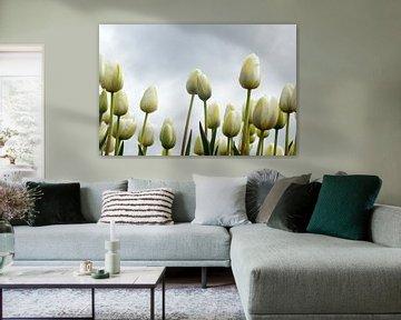 Witte tulpen van Gerda Venema
