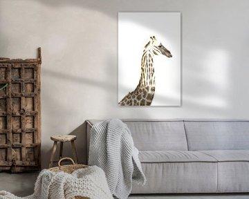 Giraffe und Zebra Zusammensetzung von Bobsphotography