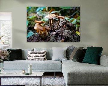 Champignons in het bos van Johannes Grandmontagne