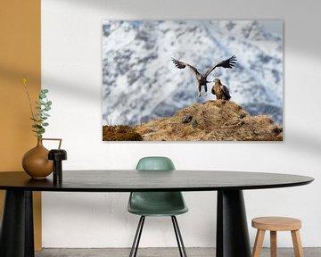 Seeadler landet neben einem anderen Seeadler von Karla Leeftink
