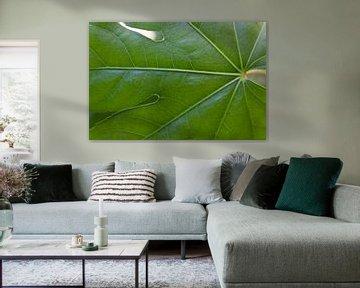 Grünes Blatt von MDRN HOME