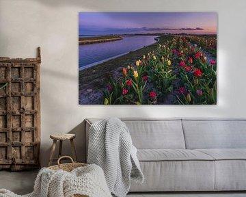 Tulpen in Zeewolde. von Robin van Maanen