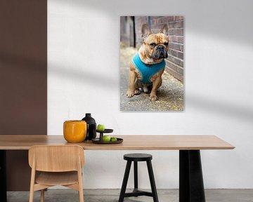 Französische Bulldogge von Edwin Butter