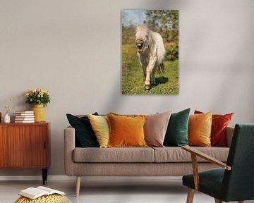 Lachendes Pony von Jeroen Mikkers