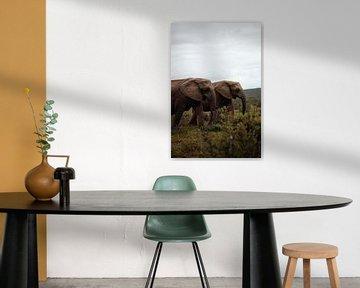 Olifanten - Zuid Afrika van Joey van Megchelen