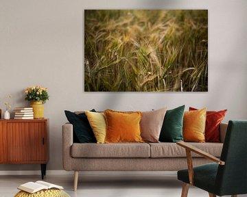 Goldenes Kornfeld Nahaufnahme-Fotodruck von Manja Herrebrugh - Outdoor by Manja