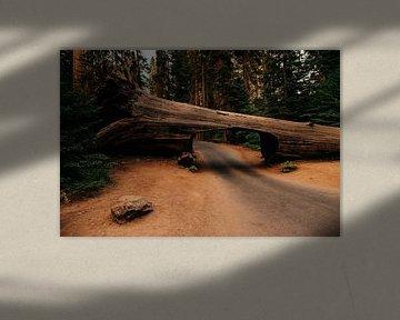Tunnel Log - Sequoia National Park van Arthur Janzen