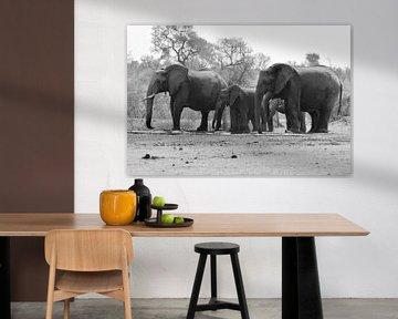 Familie Elefant von Rinke van Brenkelen